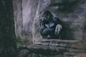 relatiestress relatietips afbeelding gorilla